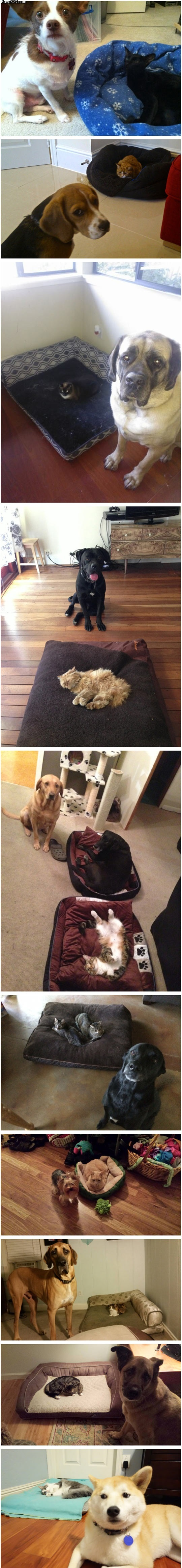 10_dog_beds_stolen_by_cats